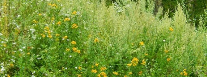 Травы и цветы