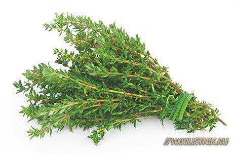 горькие травы от паразитов