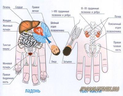 Зоны на ногтях, отвечающие за части тела