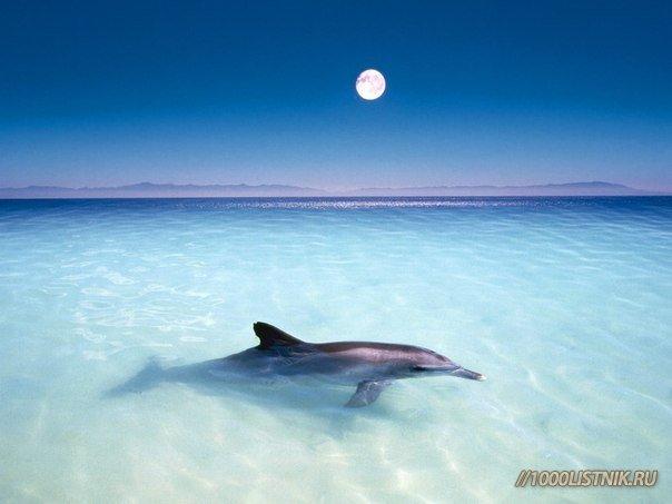 лечение голосами дельфинов