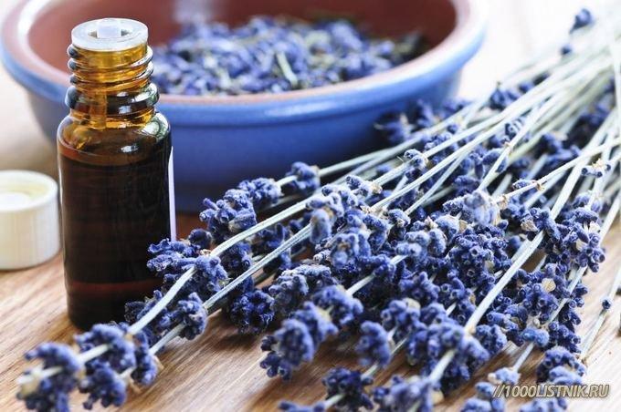 Эфирное лавандовое масло и веточка растения