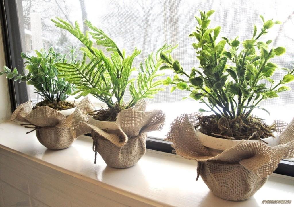 Три растения в красивых горшках на подоконнике