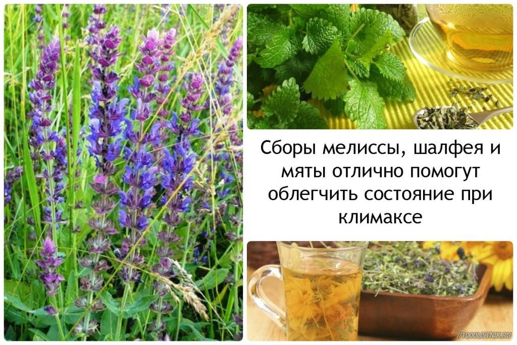 Травяные сборы при климаксе