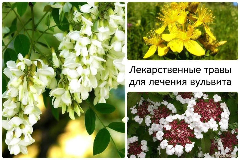 Лекарственные травы для лечения вульвита