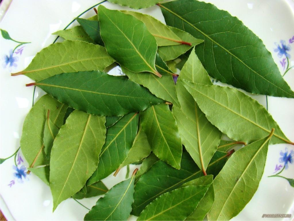 Настой из листьев лавра хорошо поможет при напавшей икоте
