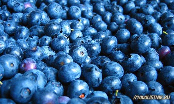 Ягоды черники содержат витамины групп С, В, Р, магний и железо