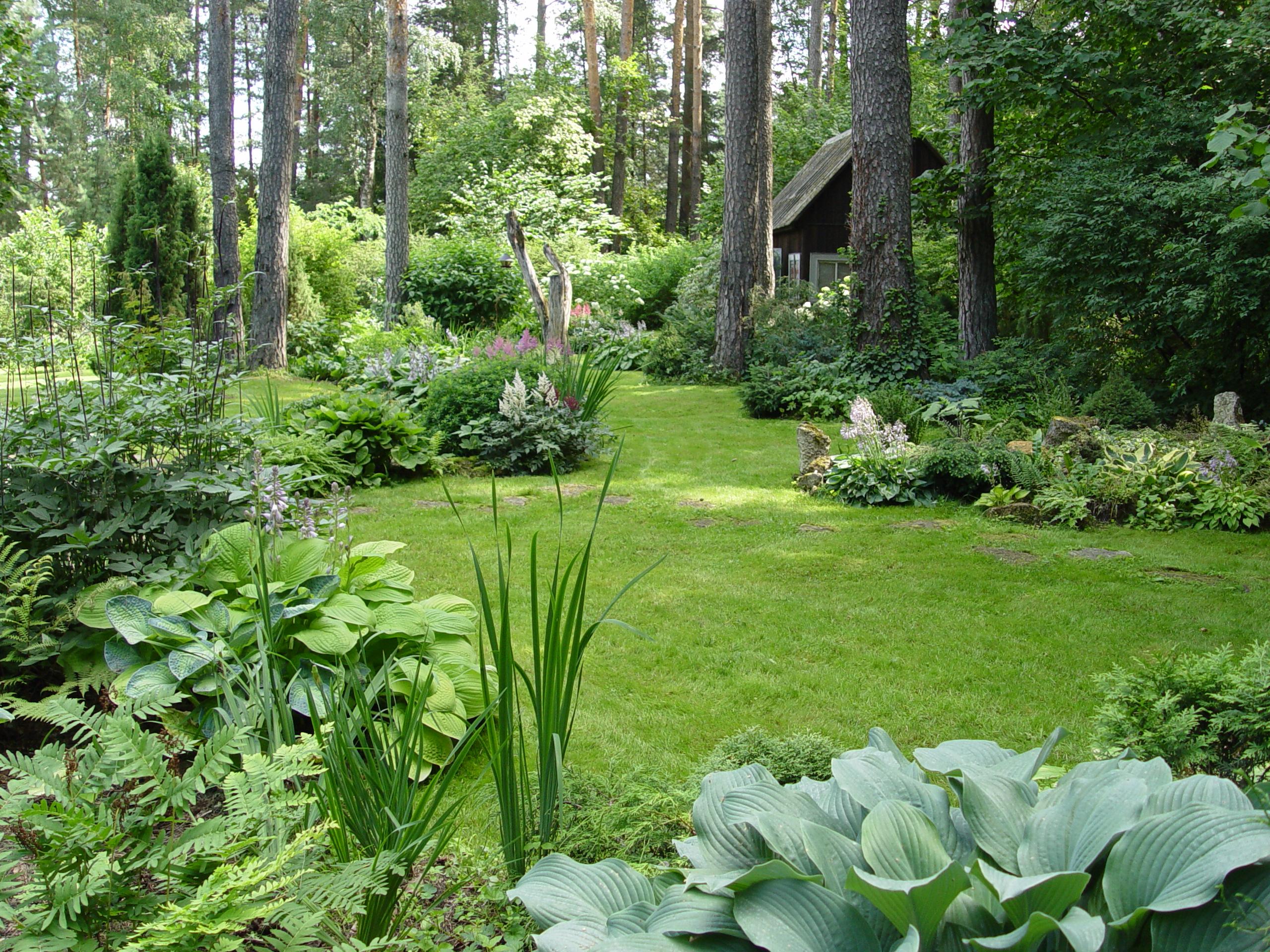 Огород в лесу