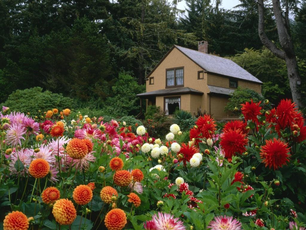 Растения дарят красоту