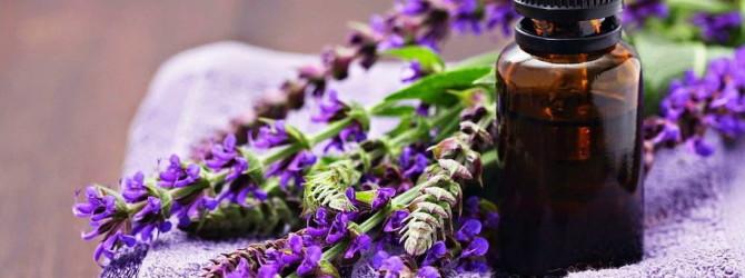 Польза эфирного масла шалфея для здоровья