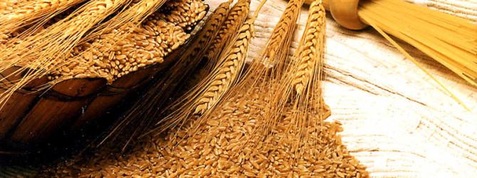 Трава пшеницы: эликсир молодости и хлорофилл