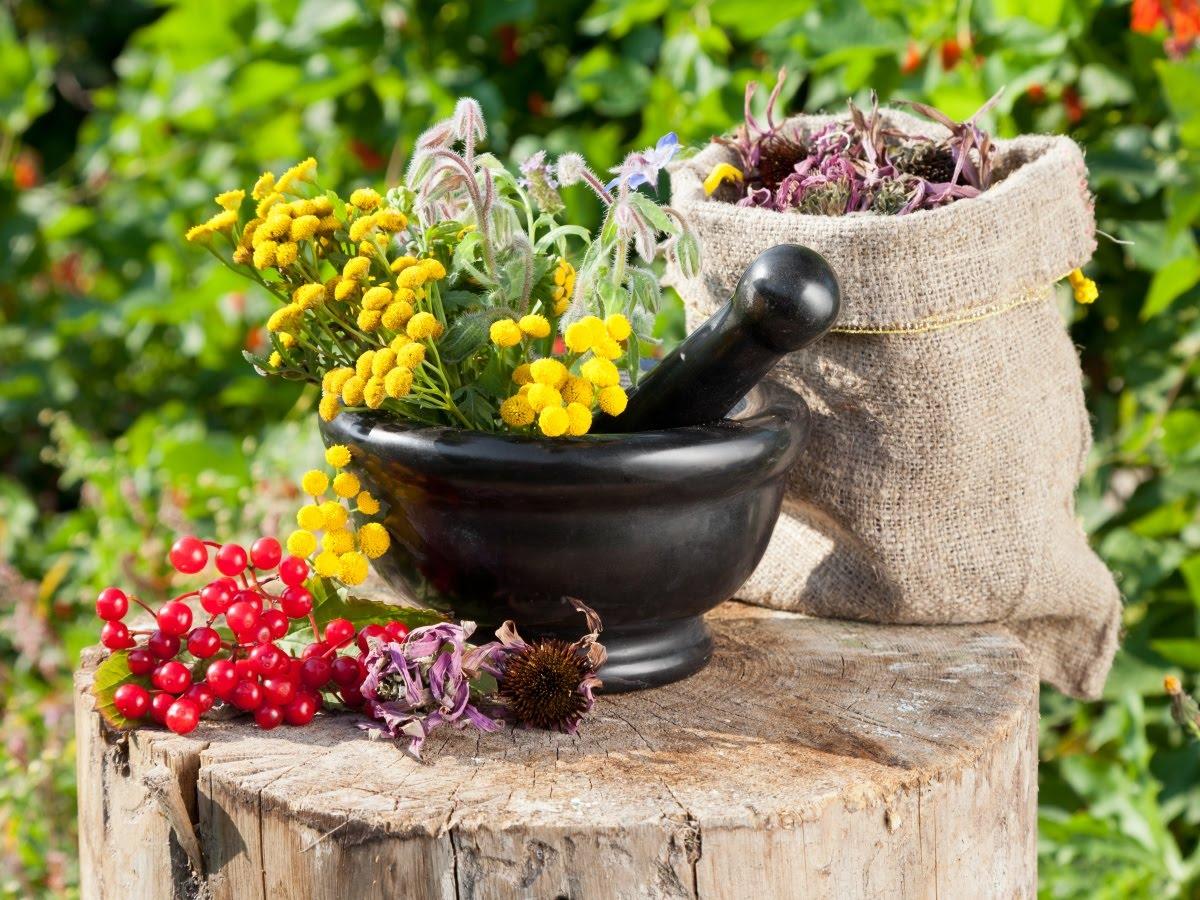 Рецепты народной медицины для здоровья и долголетия (часть 1)