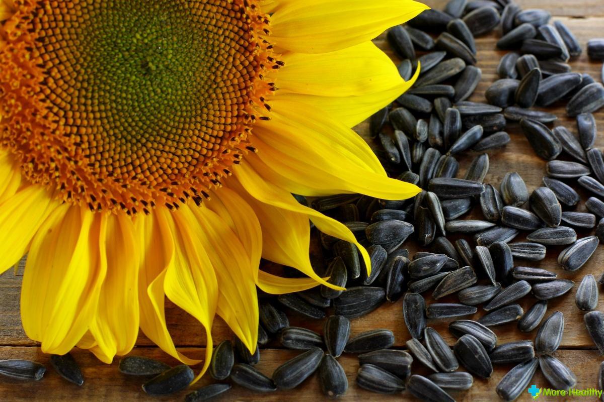 Семена подсолнечника – польза или вред?