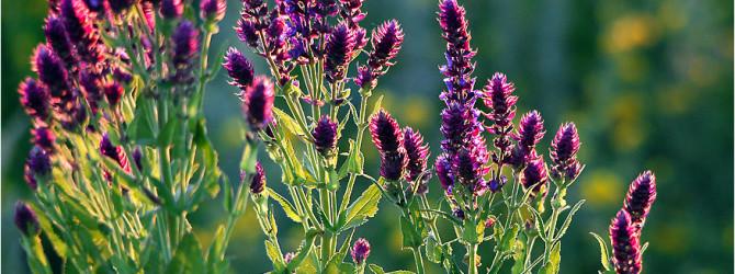 10  лекарственных трав о которых должна знать каждая женщина