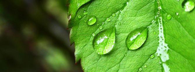 Астрологические типы растений