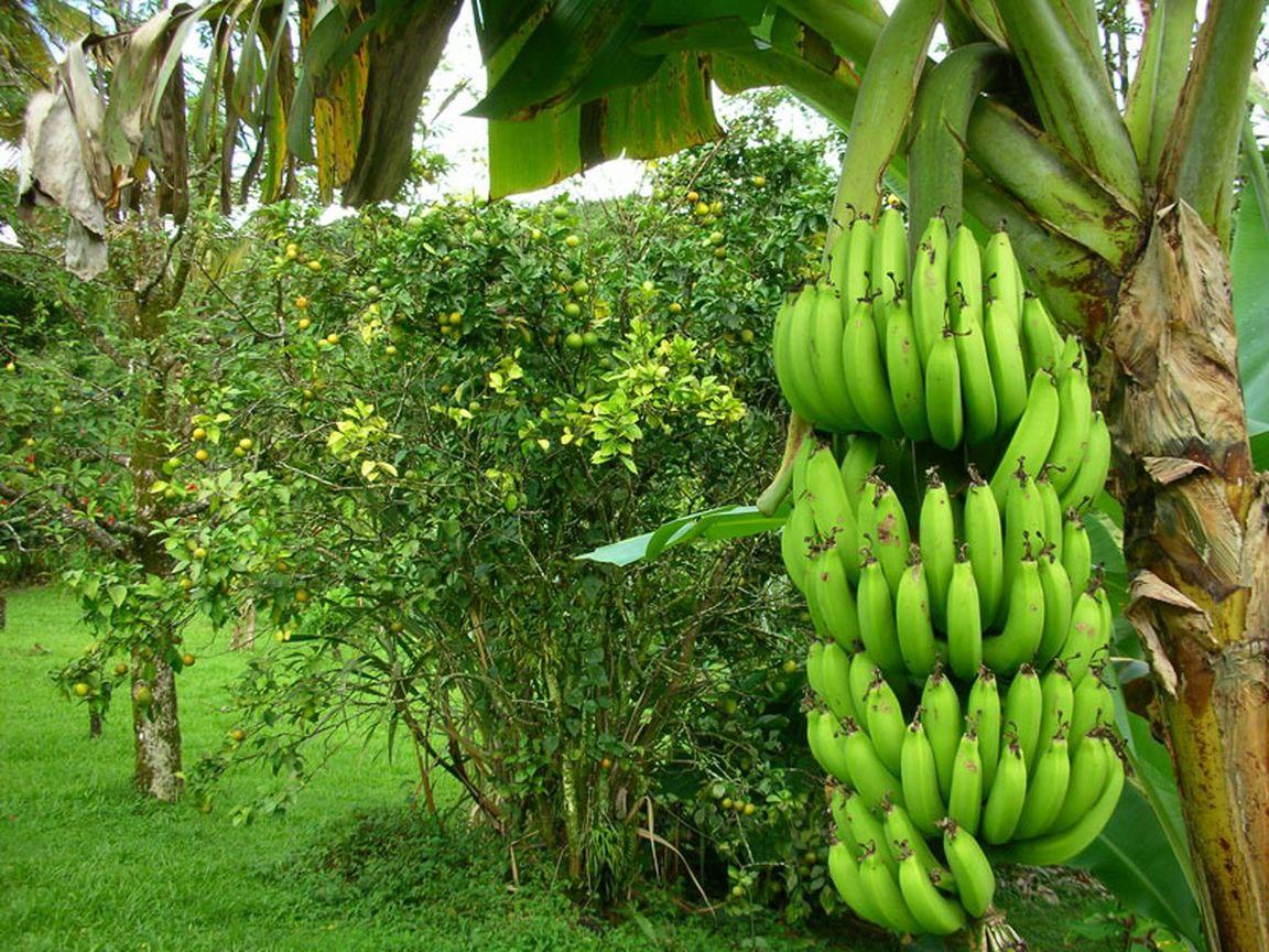Бананы — это полезно!