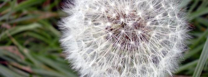 Желчно-каменная болезнь лечение народными средствами