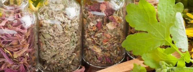 Заготовка и хранение лекарственных растений в домашних условиях