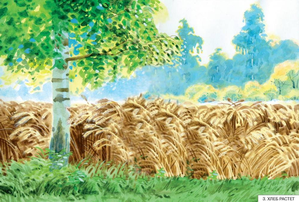 Пшеница, рожь, овес