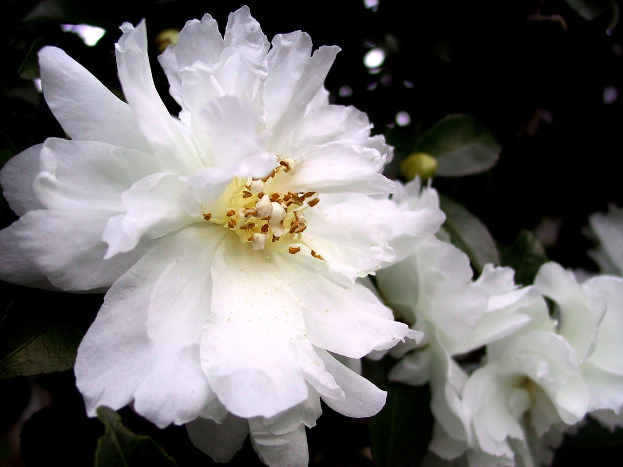 Лечение белым цветом