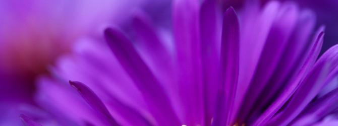 Лечение фиолетовым цветом