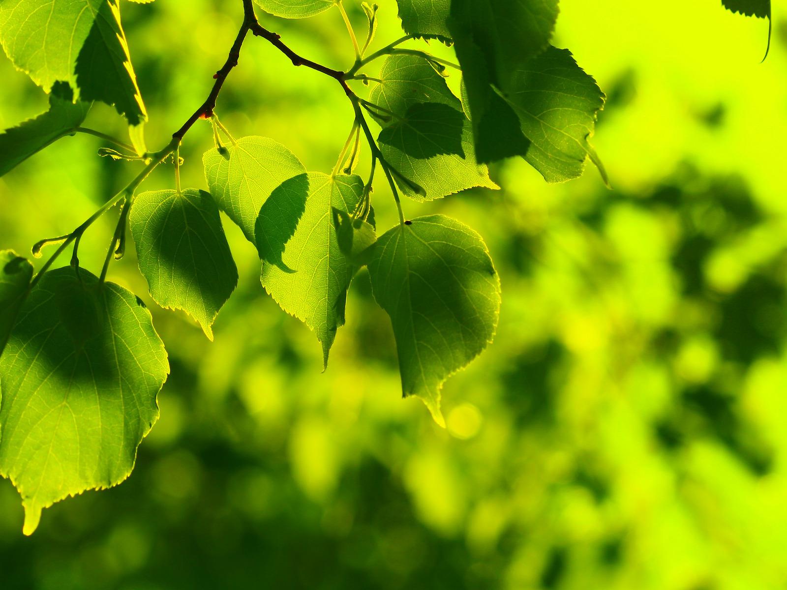 Лечение зеленым цветом
