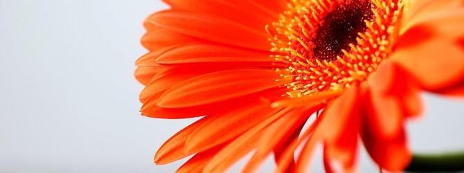 Лечение оранжевым цветом