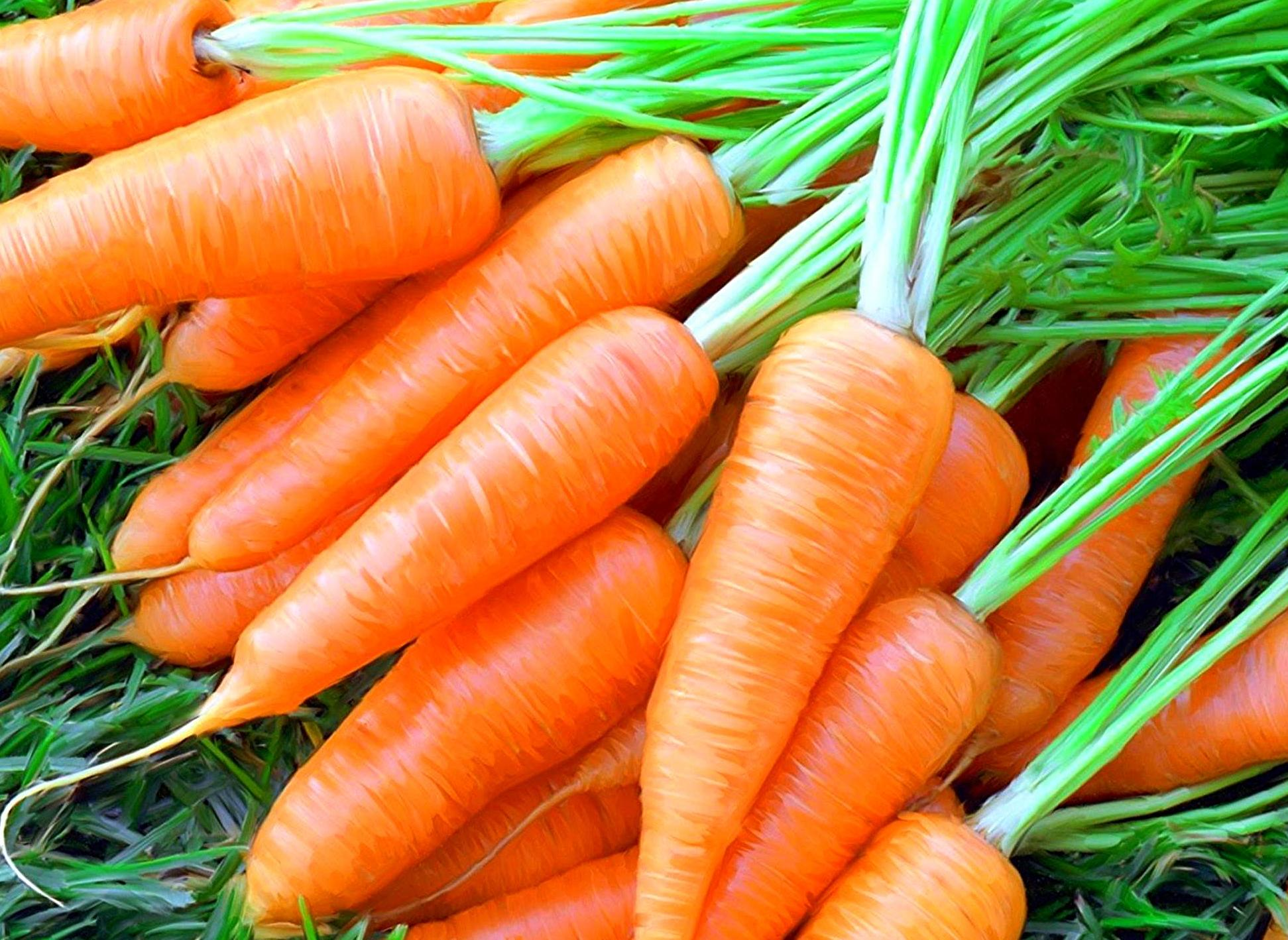 Картинки по запросу морковь фото