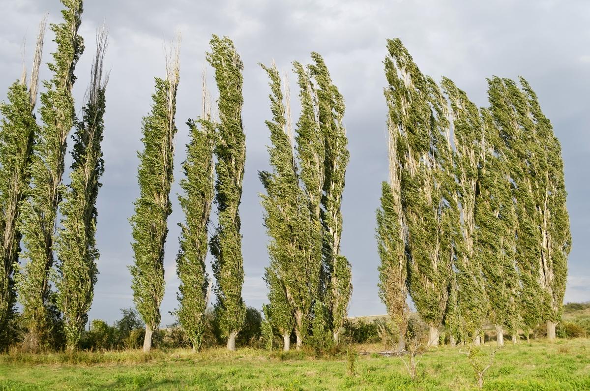 народные травы от паразитов в организме