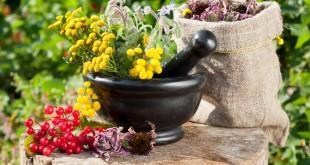 Что такое лекарственные растения