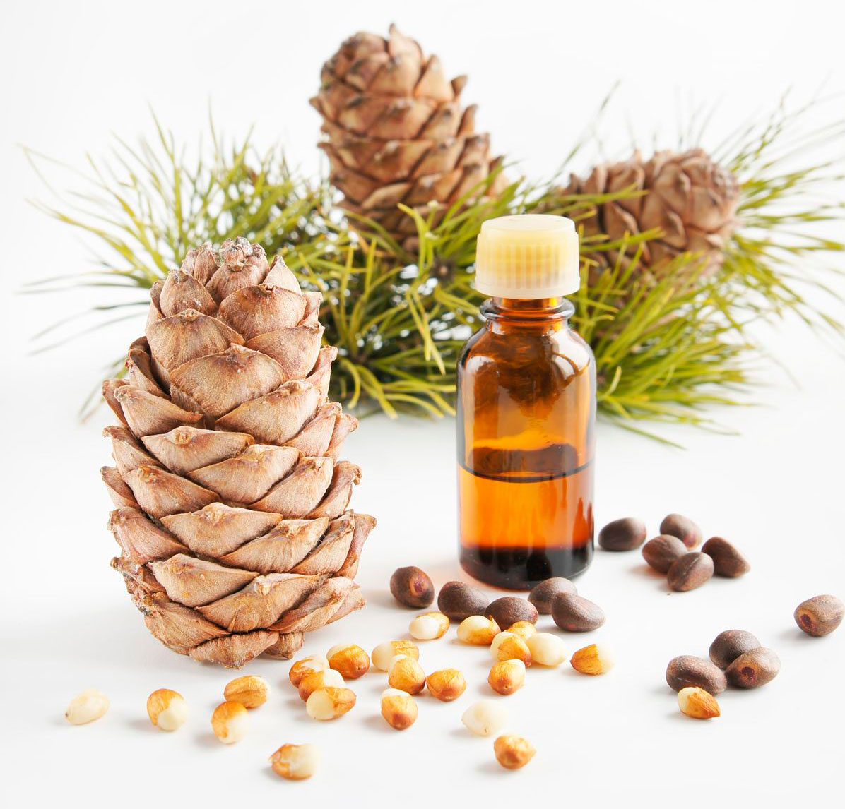 Полезны ли беременным кедровые орехи