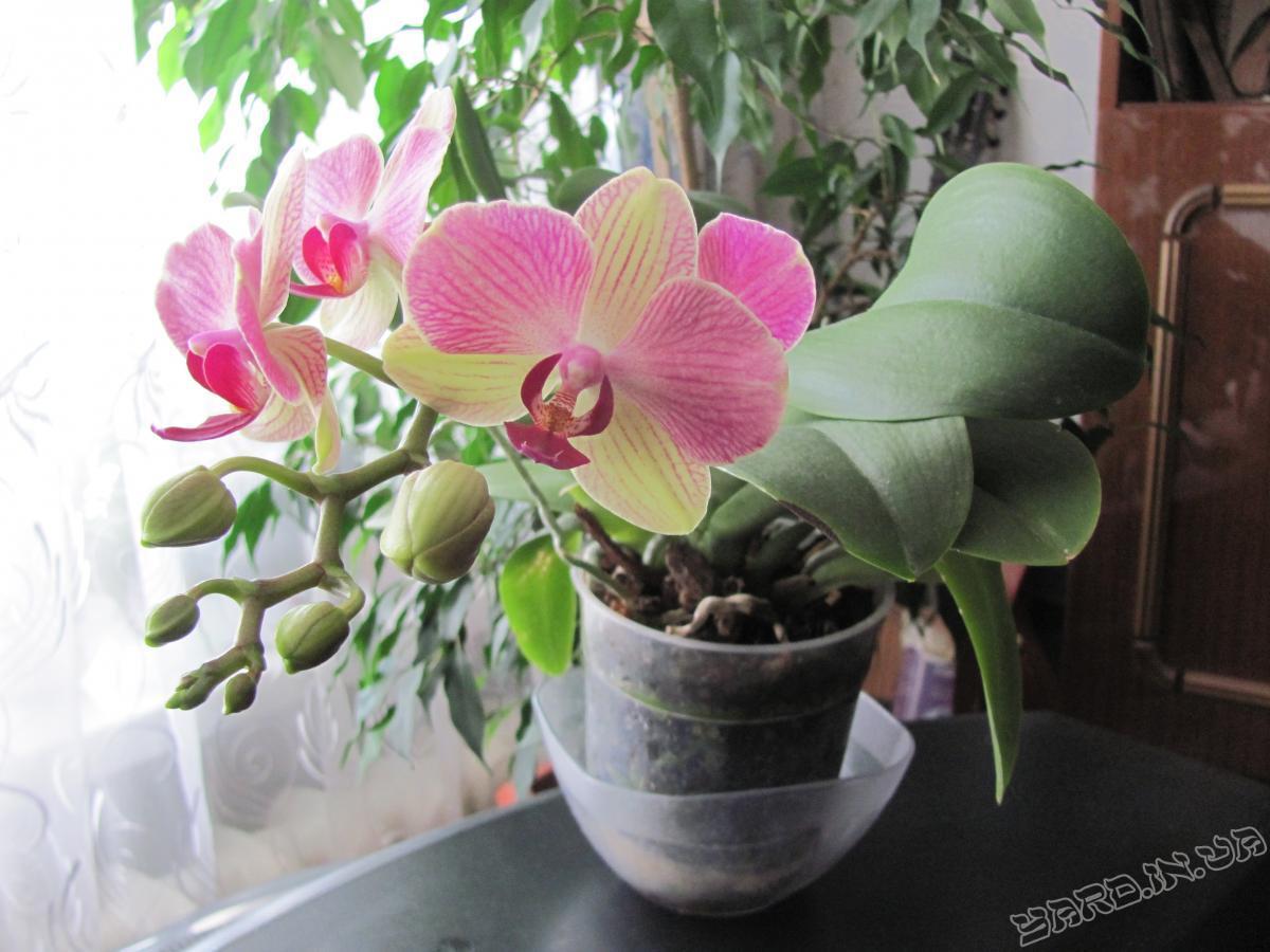 Комнатные растения и их энергетика