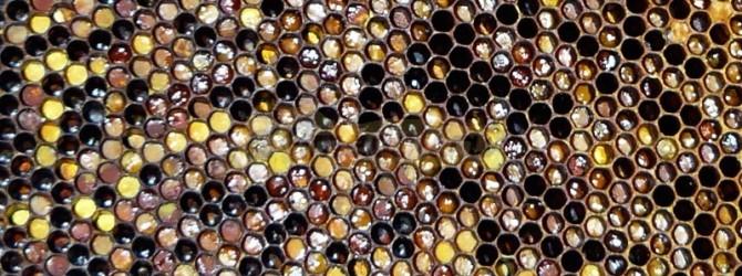Лечение цветочной пыльцой и пергой