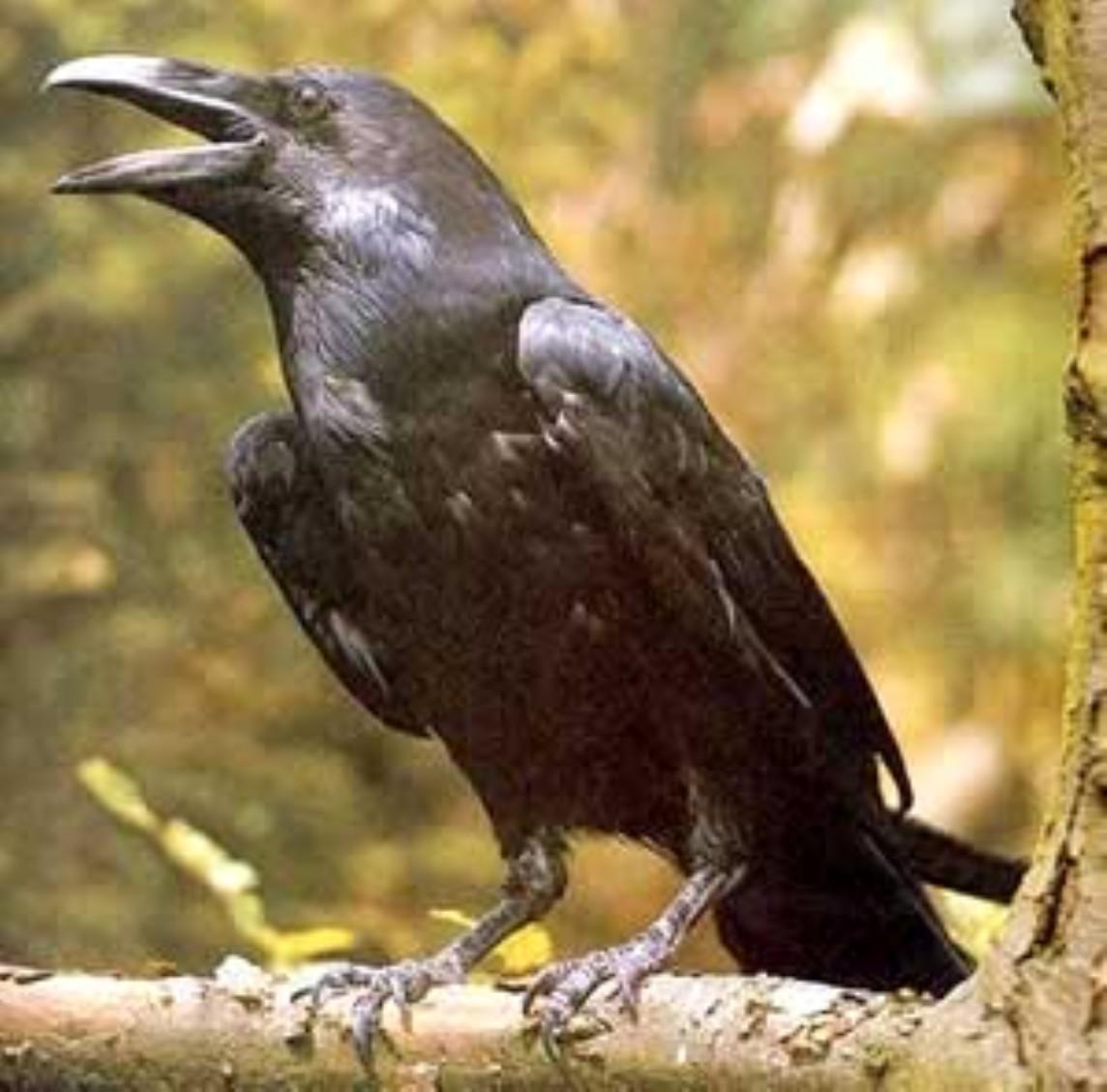 Лечение голосами птиц