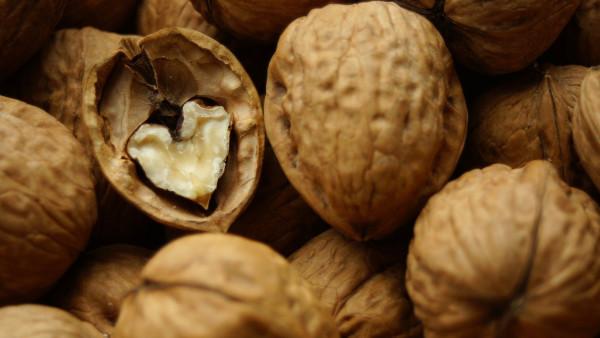 Перегородки грецкого ореха и скорлупа