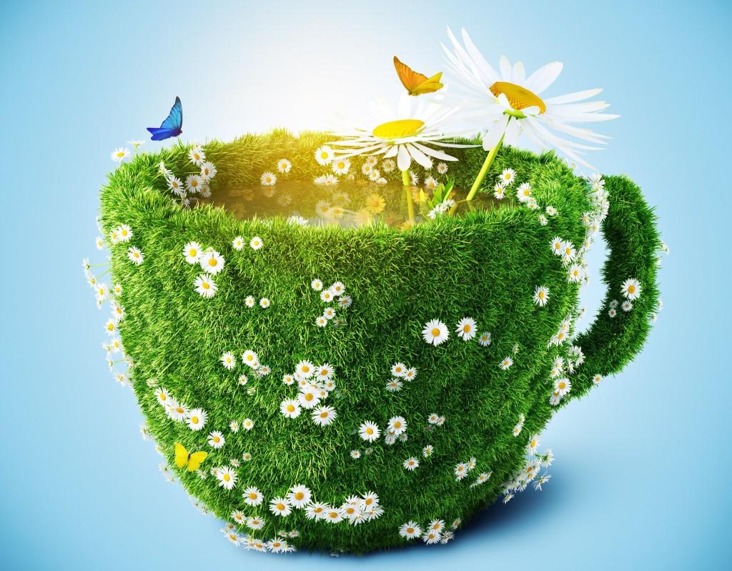 Антипаразитарный чай своими руками
