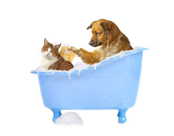 Собака и кот купаются