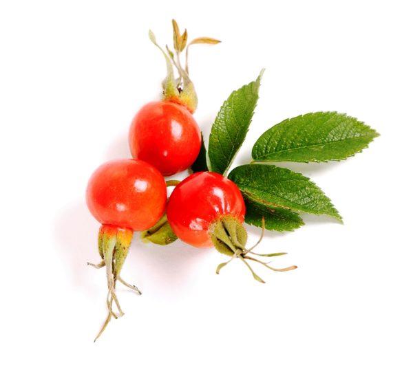Три ягоды шиповника