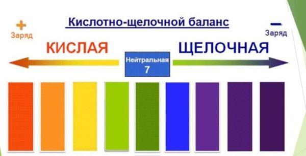 Схема соотношения кислот и щелочей в организме человека