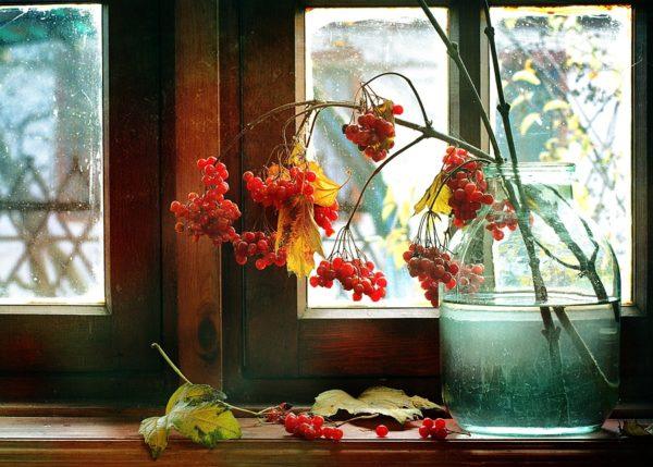 Калина на окне