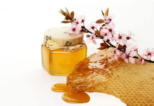Мёд и цветущая ветка