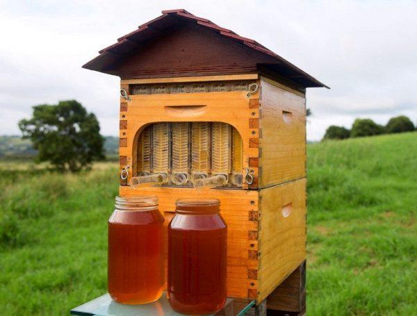 Пчелиный улей и банки с мёдом