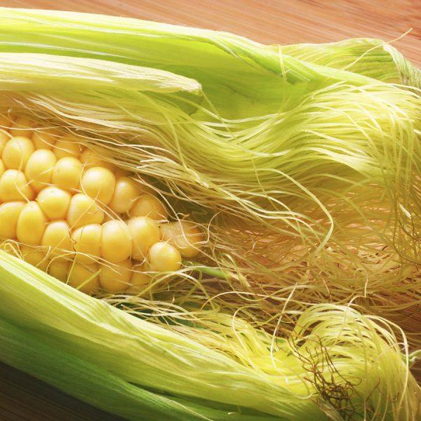 Раскрытый початок кукурузы с пестиками: столбиками и рыльцами